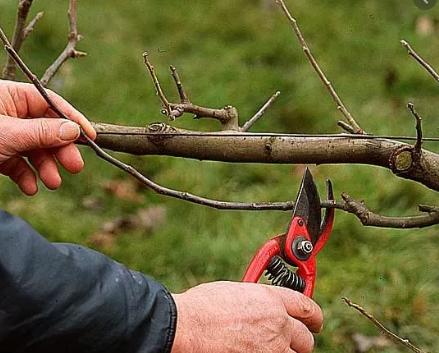 En ce moment on taille les arbres fruititers ! Profitez de nos conseils et expertises