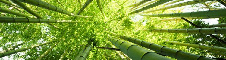 atanaka-paysage-bambou